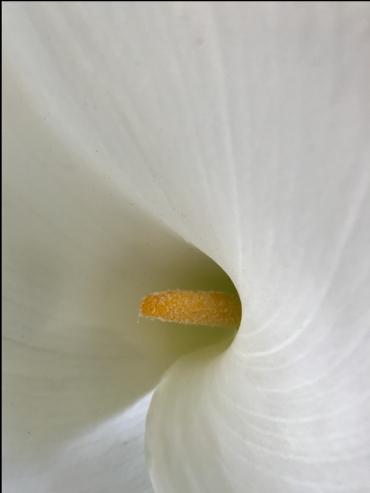 F0851 White Flower Ultra-Closeup 1 AAA