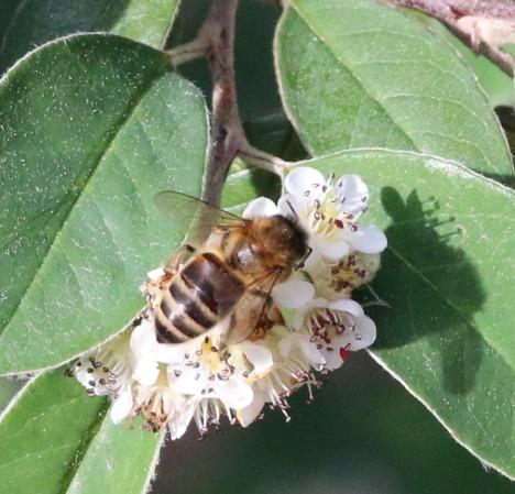 F0879 Bee ultra-close